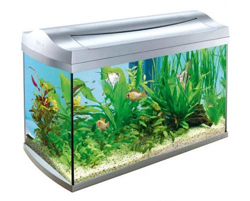 Правильно освещенный аквариум