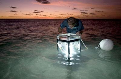 Добыча коралловых водорослей