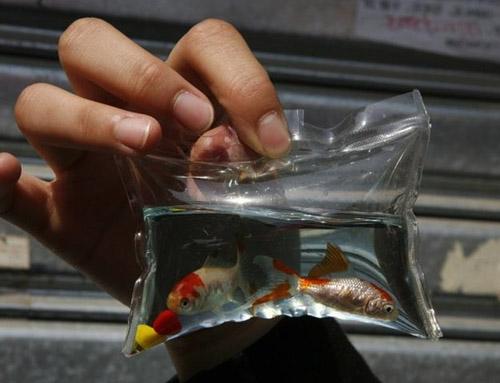Брелок с рыбками