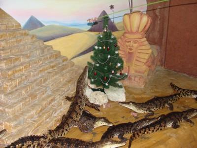 Рождественская елка в вольере у крокодилов