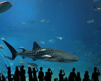 Благодаря новым оптическим технологиям посетители аквариума смогут погрузиться в мир океана