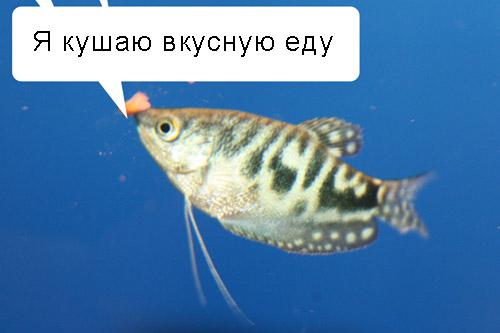 Рыбы говорят!