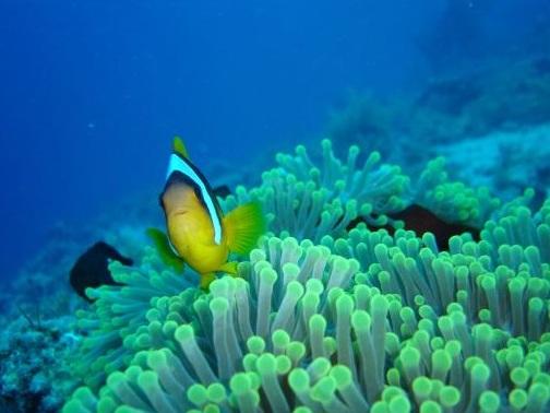 Рыбка на фоне кораллов
