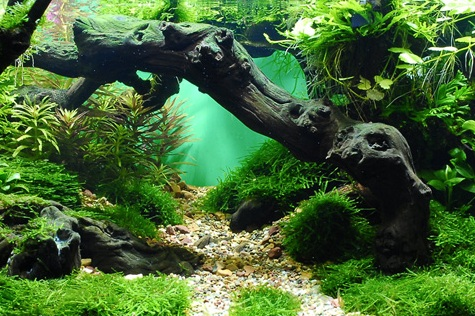 Призер конкурса дизайна аквариумов