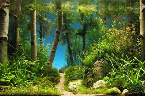 Призёр конкурса дизайна аквариумов